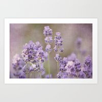 lavender Art Prints featuring lavender by Iris Lehnhardt
