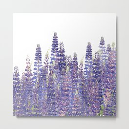 Just Lupine Metal Print