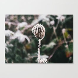 Thistle and Ice Canvas Print