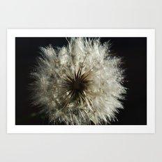 lionflower Art Print