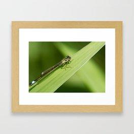 bugging around Framed Art Print
