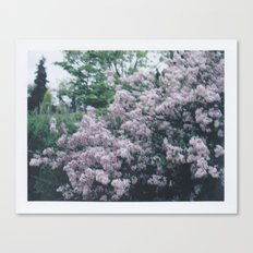 Korean Lilac Polaroid Canvas Print