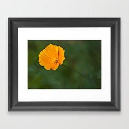 Green and Gold Framed Art Print