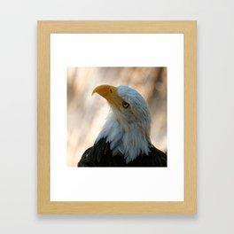 Bald Eagle | Eagle | USA | Raptor | Nature | Animal Framed Art Print