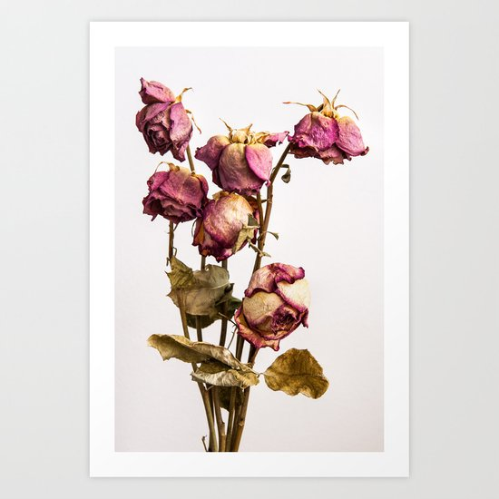 The old Roses Art Print