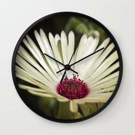 Livingstone Daisy - Glowing Wall Clock