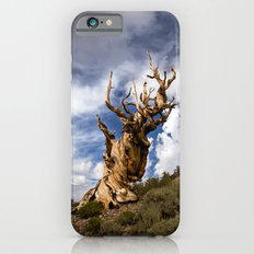 Ancient Bristlecone Pine iPhone 6s Slim Case