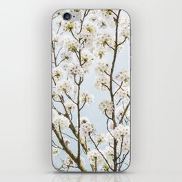 Flowering Springtime Hawthorn tree. iPhone Skin