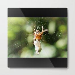 Spider With Packaged Prey Metal Print