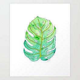 Tropical Monstera Leaf - Nature Art Print