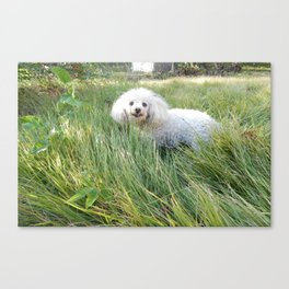 A Smiling Dog Looking At Her Friend Canvas Print
