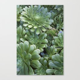 Succulents in Green Canvas Print