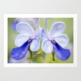 Blue Glory Bower Art Print