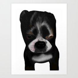 It Wasn't Me - Boston Terrier Puppy Art Print