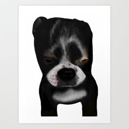 It Wasn't Me - Boston Terrier Puppy Art Print