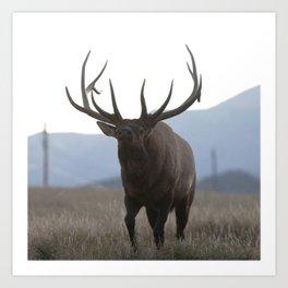 Watercolor Elk Bull 48, Estes Park, Colorado, Rage Art Print
