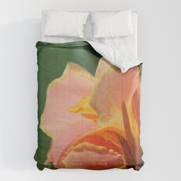 Dwarf Canna Lily named Corsica Comforters