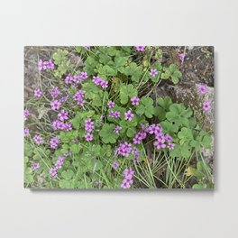 Tiny Spring Blossoms and Clovers Metal Print