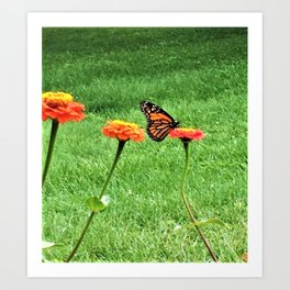 The Liberty Of A Butterfly Art Print