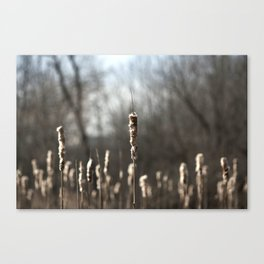 Cottontails Canvas Print