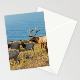 Tule Elk Herd Stationery Cards