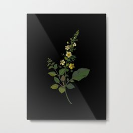 Celsia Arcturus Mary Delany Delicate Paper Flower Collage Black Background Floral Botanical Metal Print