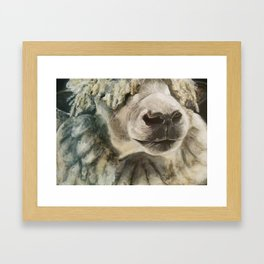 Sheep Framed Art Print