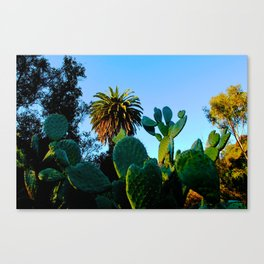 California Spikey Cactus Canvas Print
