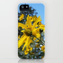 Sunflowers and the Pine Tree iPhone Case