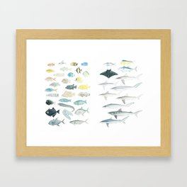 The Inhabitants of the Waters of Clipperton Atoll (both 1 and 2) Framed Art Print