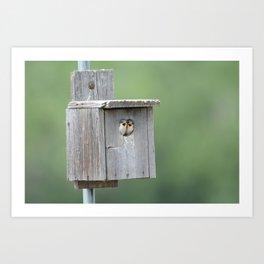Swallows in their nest Art Print