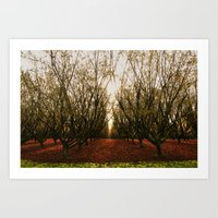 Orchard in the winter Art Print