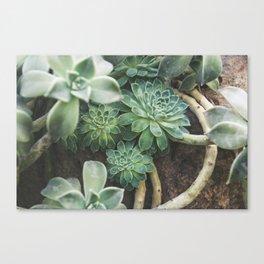 Botanical Gardens Succulent #625 Canvas Print
