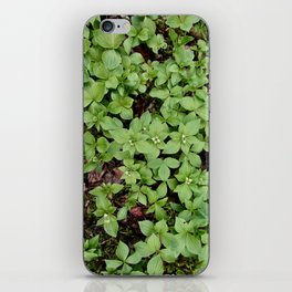 Spring Flowers iPhone Skin