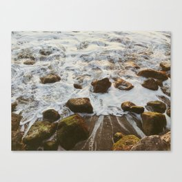 Secret senses Canvas Print
