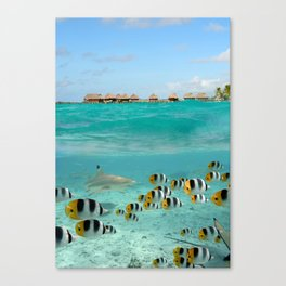 Diving with sharks on Bora Bora Canvas Print