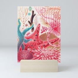 Colorful Starfish Urchin Vintage Sealife Illustration Mini Art Print