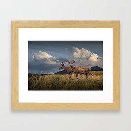 Mule Deer with Velvet Antlers in the Bighorn Mountains Framed Art Print