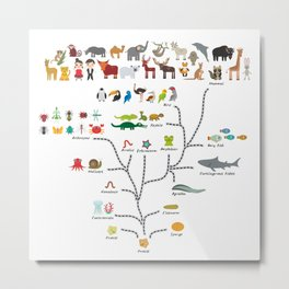 Evolution scale from unicellular organism to mammals. Evolution in biology, scheme evolution Metal Print