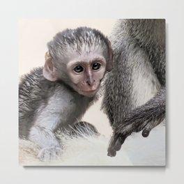 New born baby monkey Metal Print