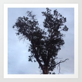 Silver sky heart tree Art Print