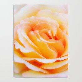 Glorious Rose Poster