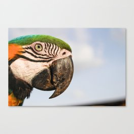 Macaw Close up Canvas Print