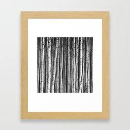 Birch || Framed Art Print