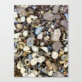 Seashells on the Ring of Kerry Canvas Print