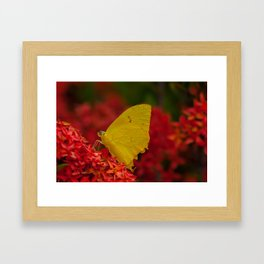 Red flowers with a yellow tropical butterfly Framed Art Print