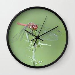 Lady Damselfly Wall Clock