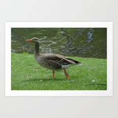 Goose Lake Art Print