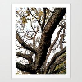 38  | Plants Photography | 200630 | Art Print