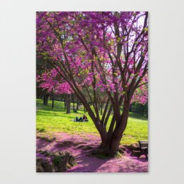 Spring in Rome #2 Canvas Print